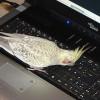 Ricos Laptopinspektion